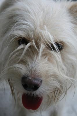 Portrait einer Hundedame
