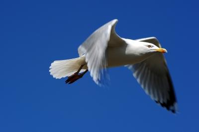 Frei wie ein Vogel nur sein kann (3)