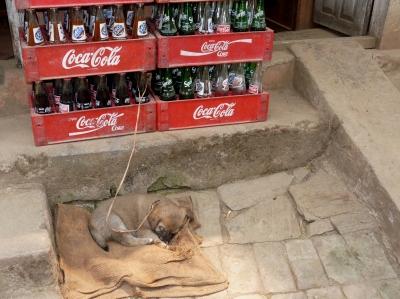 Cola-Hund