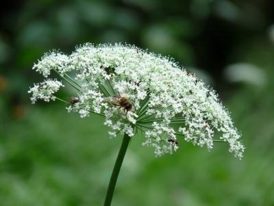 Blütenstaude mit Insekten