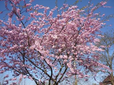wunderbare Blütenpracht