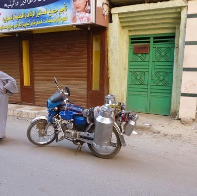 Transport von Milch in Luxor ( Ägypten )