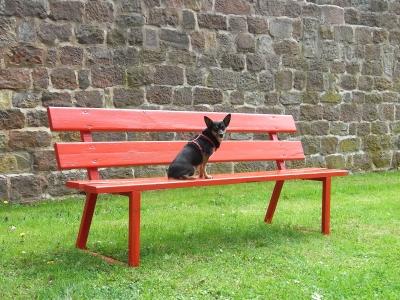 wissembourg....parkbank mit hund