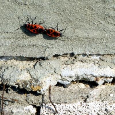 Wie heissen diese Käfer und was machen sie