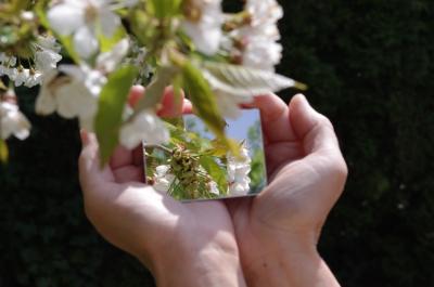 ...wer ist die Schönste im Blütenland?