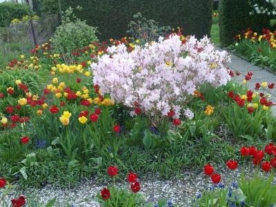 Frühlingsgarten 2