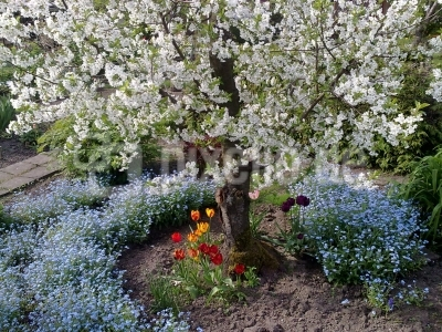 Frühlingsgarten 3