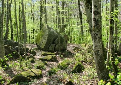 Wald am Ballenberg