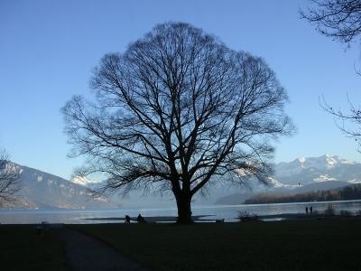 Baum vor Bergen