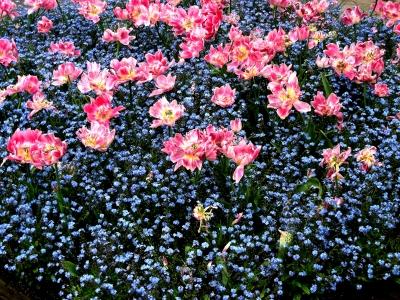 Frühlingsblumen in Erlangen