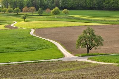 Feldwaldundwiesenkreuzung