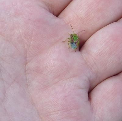 Ein bunter Käfer auf meiner Hand