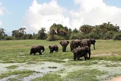 Badeplatz der Elefanten