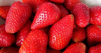Erdbeeren ROT