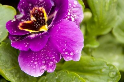 Und noch ein Blumenbild