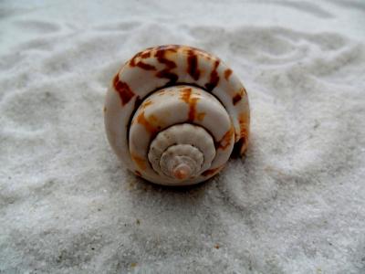 muschel im weißen sand