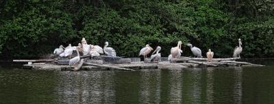 Pelican's Island