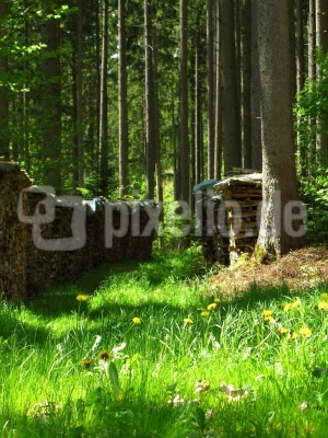 Unser Wald - Energielieferant Nr. 1