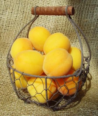 Aprikosenkörbchen