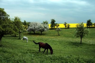 Landidyll oder Pferde und dunkler Himmel