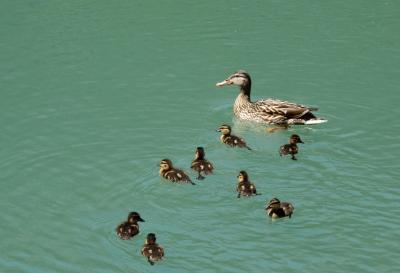 Alleinerziehende Mutter mit acht Kindern