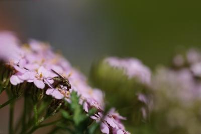 Pause auf Blüte
