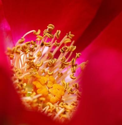 Blütenkelch