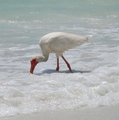 weißer Vogel