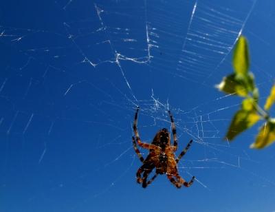 Spinne flickt ihr Netz