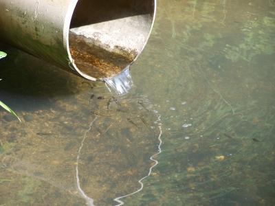 Elritzen am Wassereinlauf