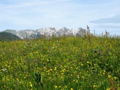 Bunt blühen die Alpenblumen