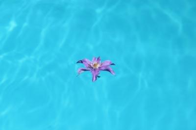 Blume im Pool