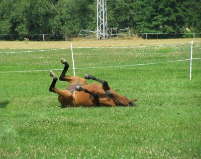 Pferde auf der Sommerkoppel2