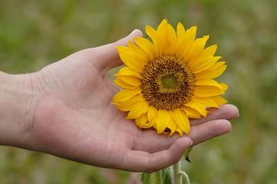 Und in der Hand die Sonne halten.....