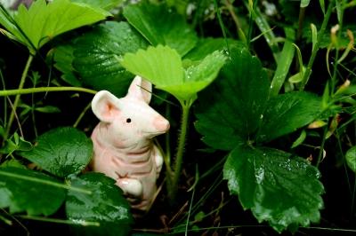Schweinchen im Erdbeerwald
