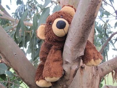 Wer sagt, dass ich kein Koala-Bär bin?