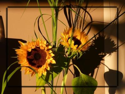 Sonnenblume mit Rahmen