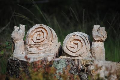Baumtier im Hochmoor2