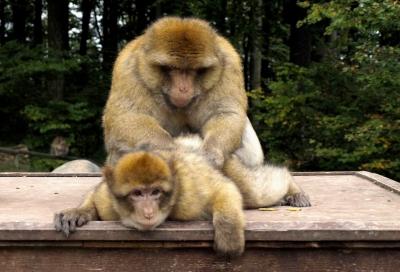 Ich glaub, mich laust ein Affe_1