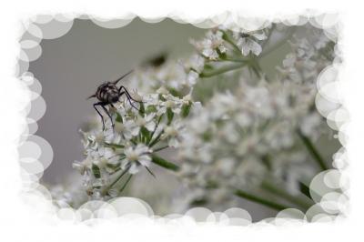 Der Po der Fliege