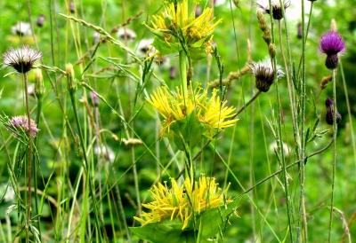 Blühende Wildpflanzen