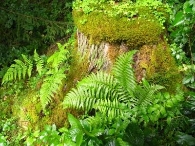 Im deutschen Regenwald