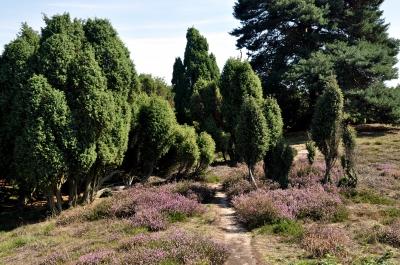 Westruper Heide 2