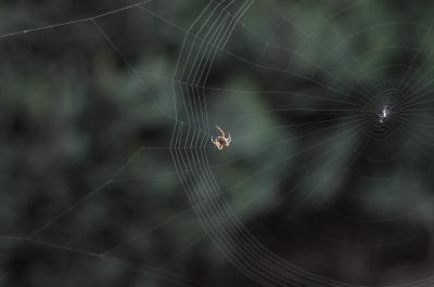 Spinne baut Netz