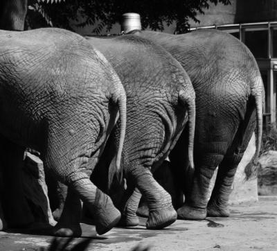 Elefantenrücksichten