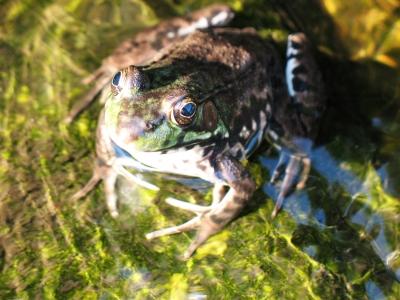 Froggy02