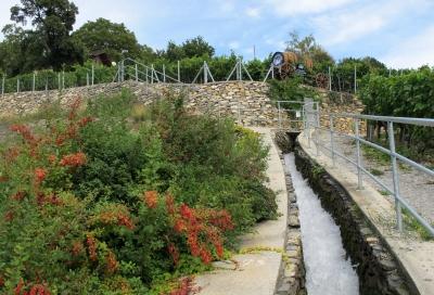 Bewässerung im Weinberg