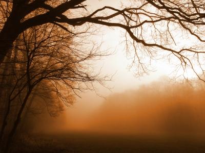 dichter nebel am 29 märz 010