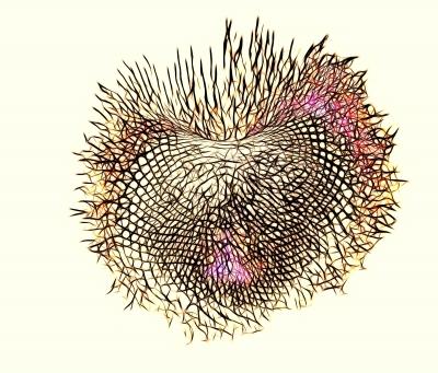 Sonnenblumen-Herz