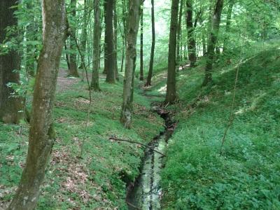 Laubwald mit viel Energie